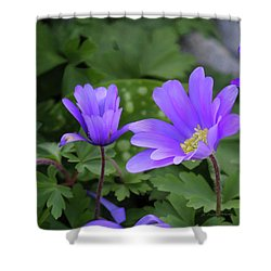 Vinca In The Morning Shower Curtain