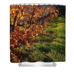 Vineyard 13 Shower Curtain by Xueling Zou
