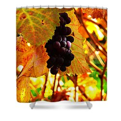 Vineyard 20 Shower Curtain by Xueling Zou