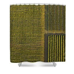 Vineyard From Above Shower Curtain by Diane Diederich