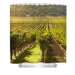 Vineyard In Napa Valley Shower Curtain by Diane Diederich