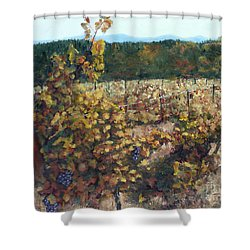 Vineyard Lucchesi Shower Curtain