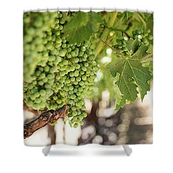 Wine Vineyard Of St. Helena - Grapevine Napa Valley Photography Shower Curtain