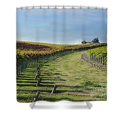 Shower Curtain featuring the photograph Vineyard Shadows Livermore by Haleh Mahbod