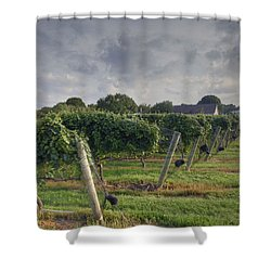 Vineyard With  Barn Shower Curtain