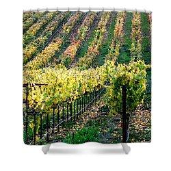 Vineyards In Healdsburg Shower Curtain by Charlene Mitchell