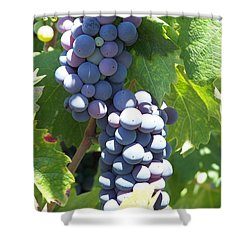 Vino On The Way Shower Curtain