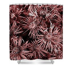 Vintage Asters Shower Curtain by Danielle R T Haney