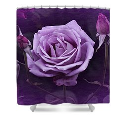 Vintage Aug Purple Rose Shower Curtain