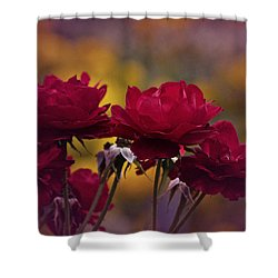 Vintage Aug Red Roses Shower Curtain