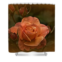 Vintage Aug Rose Shower Curtain