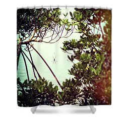 Shower Curtain featuring the digital art Vintage Banana Spider by Megan Dirsa-DuBois