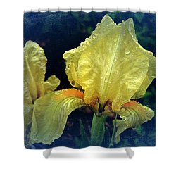 Vintage Dwarf Iris Shower Curtain by Richard Cummings