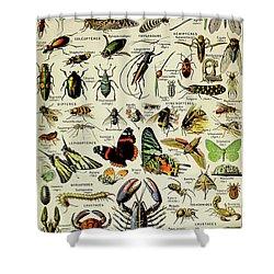 Vintage Illustration Of Various Invertebrates Shower Curtain