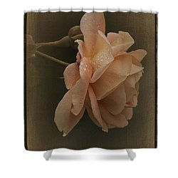 Vintage November Rose Shower Curtain by Richard Cummings