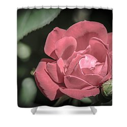 Vintage Pink Rose Shower Curtain by Bruce Pritchett
