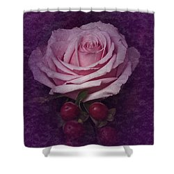 Vintage Pink Rose Feb 2017 Shower Curtain by Richard Cummings