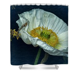 Vintage Poppy 2017 No. 2 Shower Curtain by Richard Cummings