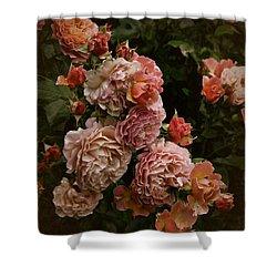 Vintage Roses, 6.17 Shower Curtain