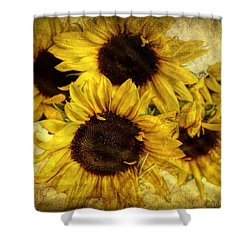 Vintage Sunflowers Shower Curtain by Wallaroo Images