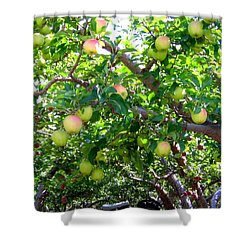 Vintage Tractor In Apple Orchard Shower Curtain