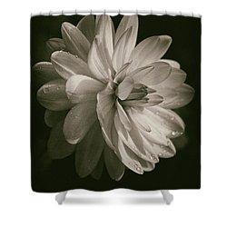 Vintage Velvet  Shower Curtain