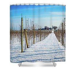 Vinyard On Down Road  Shower Curtain