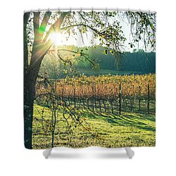 Vinyard Sunset Shower Curtain
