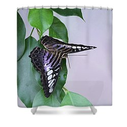 Violet Clipper Butterfly V2 Shower Curtain