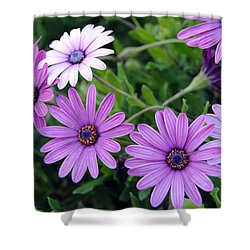 The African Daisy Flowers Shower Curtain