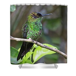 Violet-fronted Brilliant Shower Curtain