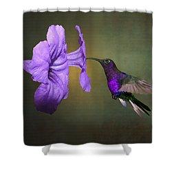 Violet Sabrewing Hummingbird Shower Curtain