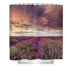 Violet Sunrise Shower Curtain by Evgeni Dinev