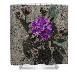 Shower Curtain featuring the photograph Violets In The Sand by Jeremy McKay