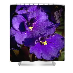 Shower Curtain featuring the photograph Violets by Phyllis Denton