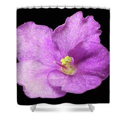 Violet Show 2017 Shower Curtain