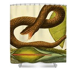 Viper Fusca Shower Curtain