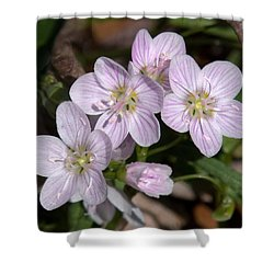 Virginia Or Narrowleaf Spring-beauty Dspf041 Shower Curtain