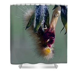 Virginia Tiger Moth 3 Shower Curtain