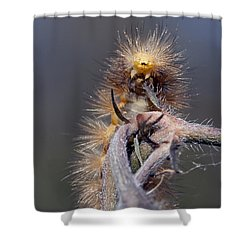 Shower Curtain featuring the photograph Virginian Tiger Moth 4 by David Lester
