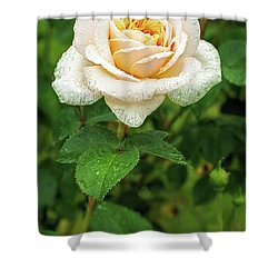 Virtue Of Pureness Shower Curtain by Ken Stanback