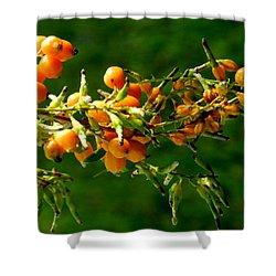 Vivid Berries Shower Curtain