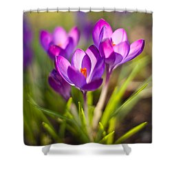 Vivid Petals Shower Curtain by Mike Reid