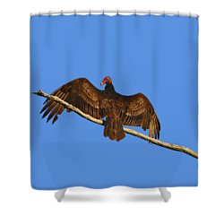 Shower Curtain featuring the photograph Vivid Vulture .png by Al Powell Photography USA