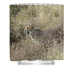 Shower Curtain featuring the photograph Vocalizing by Fraida Gutovich