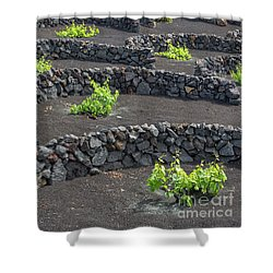 Volcanic Vineyards Shower Curtain by Delphimages Photo Creations