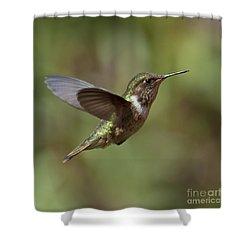 Volcano Hummingbird Shower Curtain by Nina Stavlund