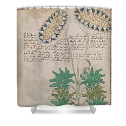Voynich Flora 04 Shower Curtain