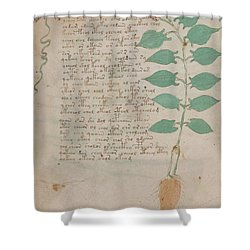 Voynich Flora 07 Shower Curtain