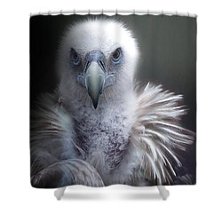 Shower Curtain featuring the photograph Vulture 2 by Christine Sponchia